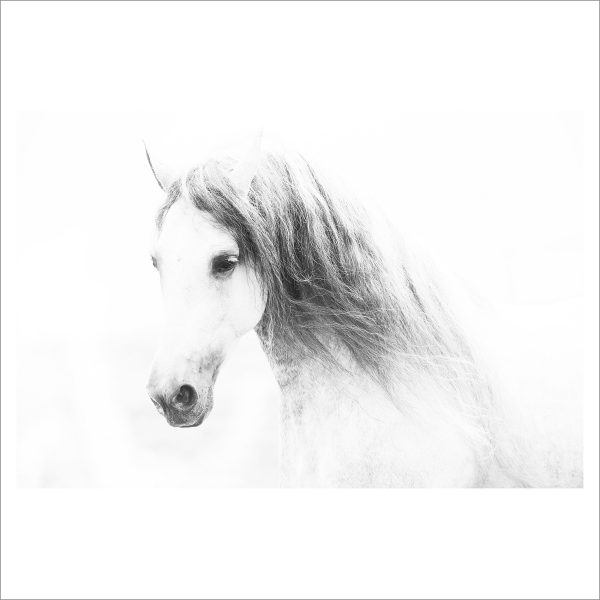 HORSES HEAD - 073 -  LIMITED EDITION PRINT