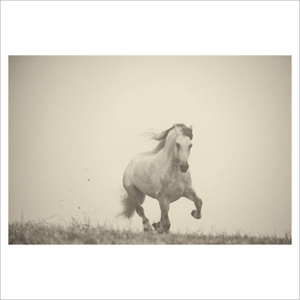 GALLOPING HORSE - 002-  LIMITED EDITION PRINT