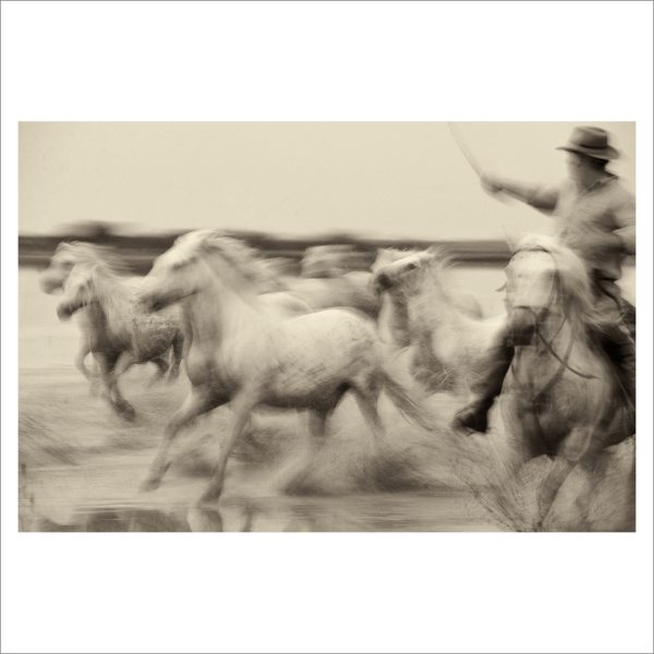 HORSES IN WATER - 004 - LIMITED EDITION PRINT
