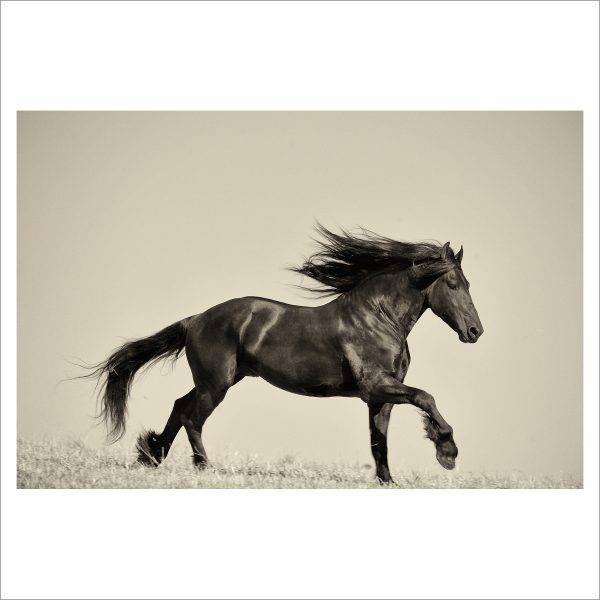 HORSE IN MOTION - 005-  LIMITED EDITION PRINT