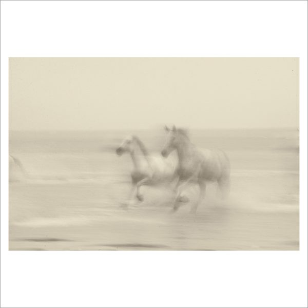 HORSES IN WATER - 006 - LIMITED EDITION PRINT