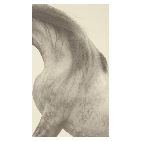 HORSES HEAD - 010- LIMITED EDITION PRINT