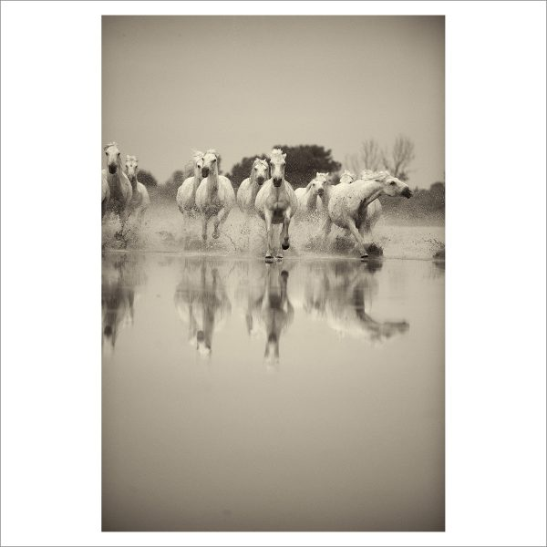 HORSES IN WATER - 012 - LIMITED EDITION PRINT