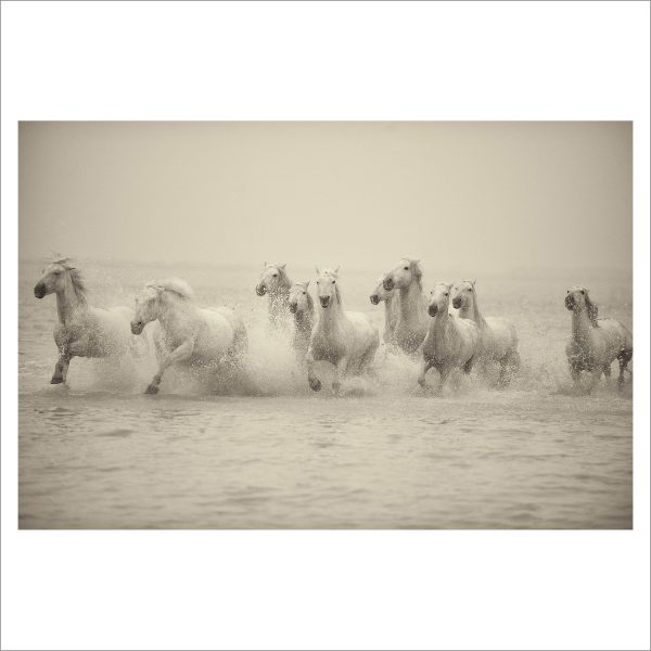 HORSES IN WATER - 013 - LIMITED EDITION PRINT