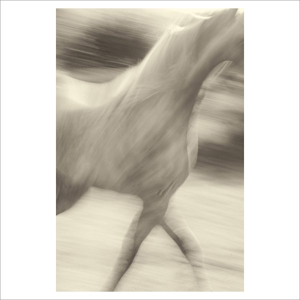 HORSES IN MOTION - 014 - LIMITED EDITION PRINT