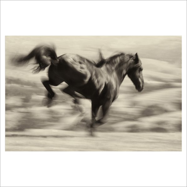 HORSE IN MOTION - 015 - LIMITED EDITION PRINT