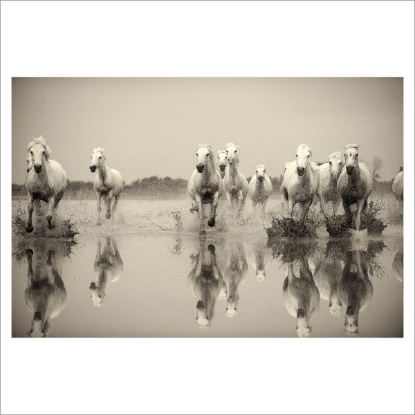 HORSES IN WATER - 019 - LIMITED EDITION PRINT