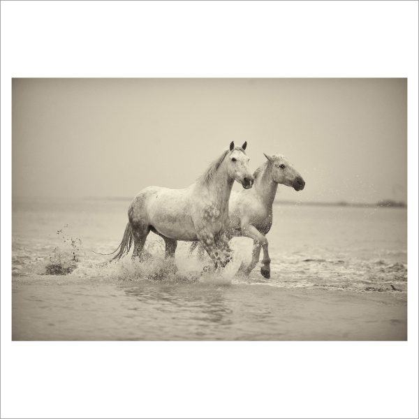 HORSES IN WATER - 021 - LIMITED EDITION PRINT