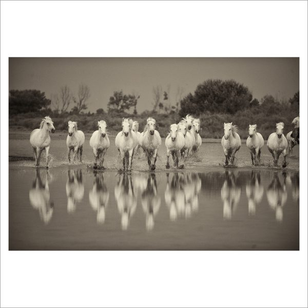 HORSES IN WATER - 025 - LIMITED EDITION PRINT