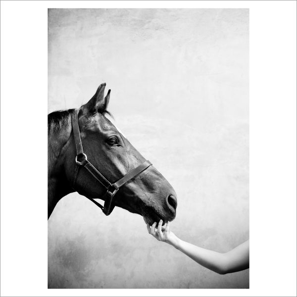 HORSES HEAD - 170 - LIMITED EDITION PRINT