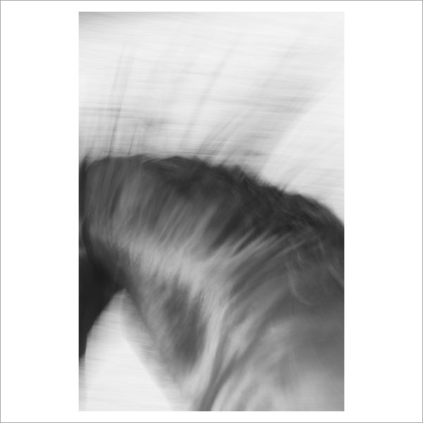 HORSE IN MOTION - 077-  LIMITED EDITION PRINT