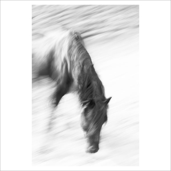 HORSE IN MOTION - 081-  LIMITED EDITION PRINT