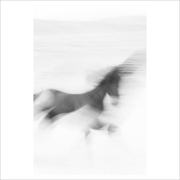 HORSE IN MOTION - 082-  LIMITED EDITION PRINT