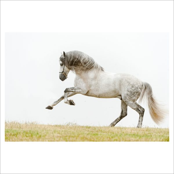 RUNNING HORSE - 060 - LIMITED EDITION PRINT