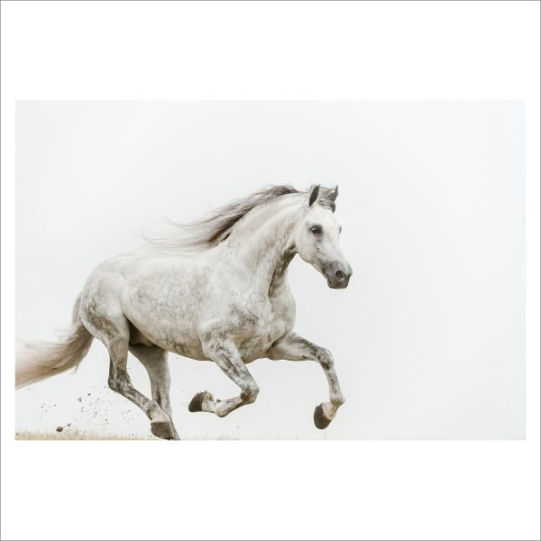 RUNNING HORSE - 061 - LIMITED EDITION PRINT