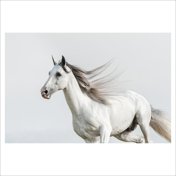RUNNING HORSE - 062 - LIMITED EDITION PRINT