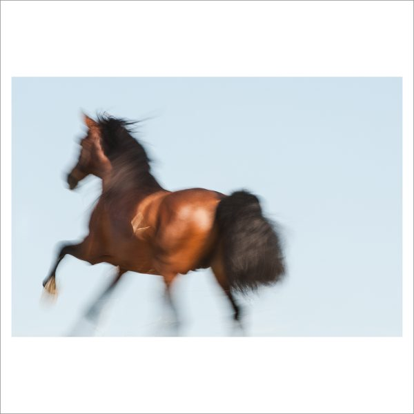 RUNNING HORSE - 063 - LIMITED EDITION PRINT