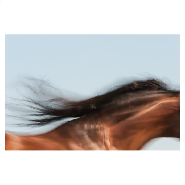 HORSE IN MOTION - 064 - LIMITED EDITION PRINT