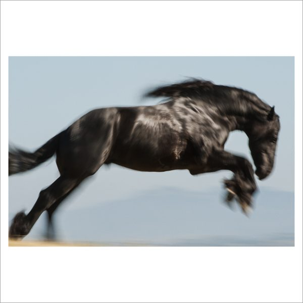 HORSE IN MOTION - 065 - LIMITED EDITION PRINT