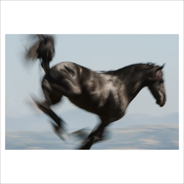 HORSE IN MOTION - 067 - LIMITED EDITION PRINT