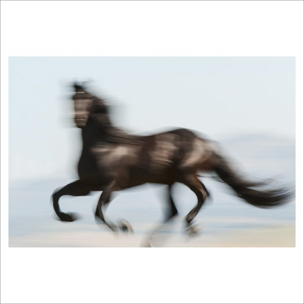 HORSE IN MOTION - 068 - LIMITED EDITION PRINT