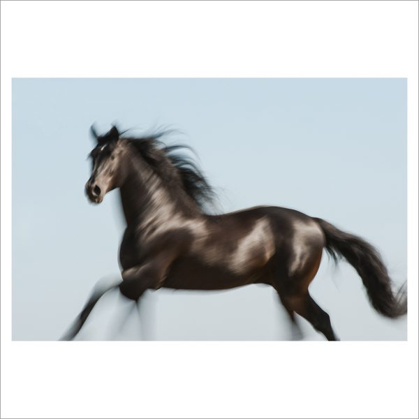 HORSE IN MOTION - 069 - LIMITED EDITION PRINT