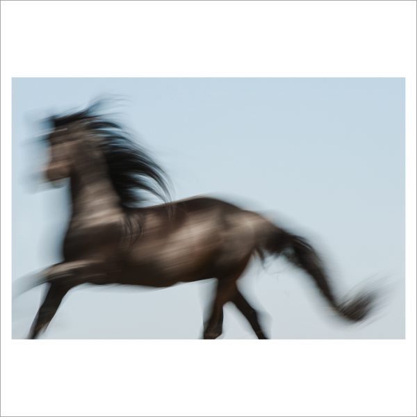 HORSE IN MOTION - 070 - LIMITED EDITION PRINT