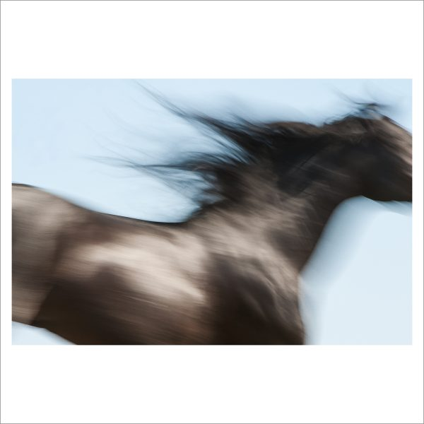 HORSE IN MOTION - 071 - LIMITED EDITION PRINT