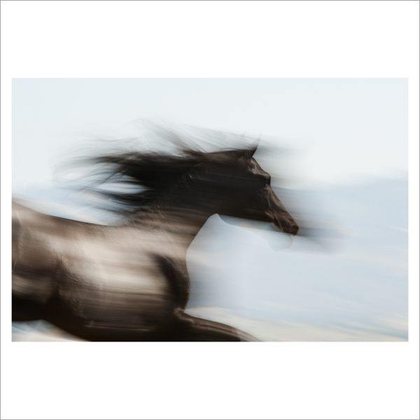HORSE IN MOTION - 072 - LIMITED EDITION PRINT