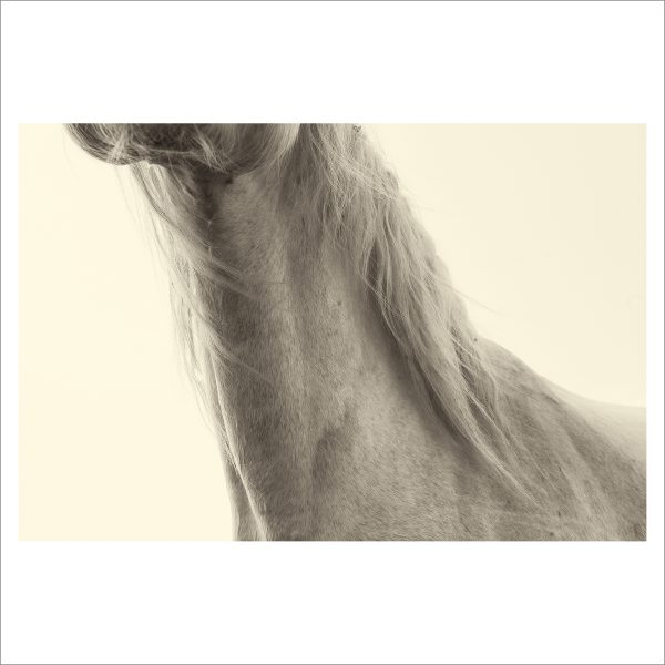 HORSES HEAD - 026 - LIMITED EDITION PRINT