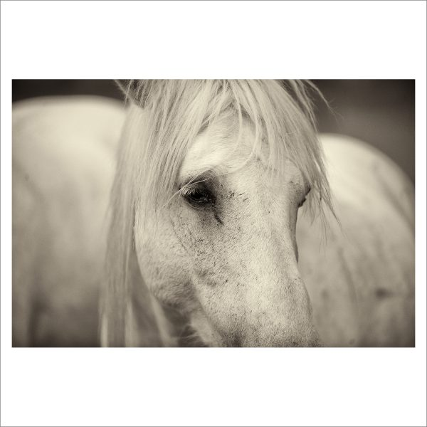 HORSES HEAD - 028 - LIMITED EDITION PRINT