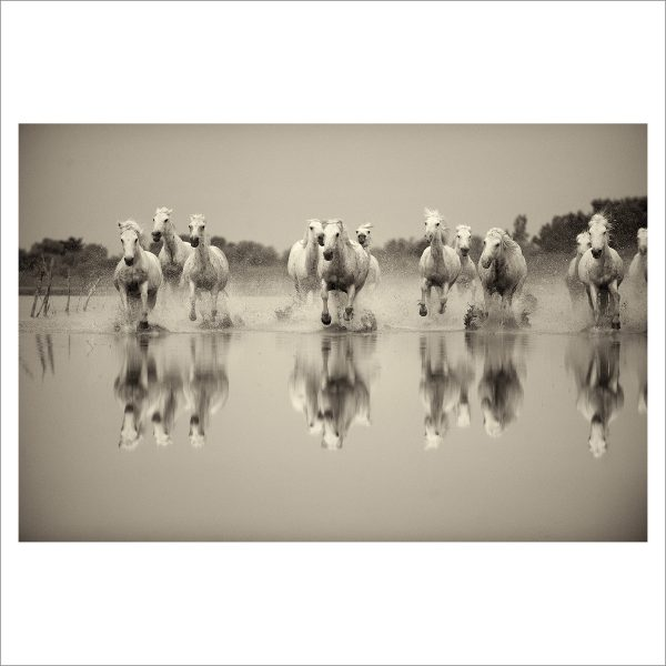 HORSES IN WILD- 031 - LIMITED EDITION PRINT