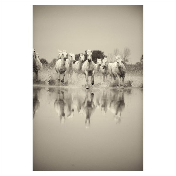 HORSES IN WILD- 032 - LIMITED EDITION PRINT