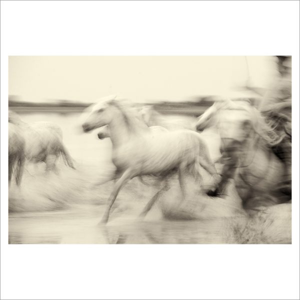 HORSES IN WILD- 035 - LIMITED EDITION PRINT