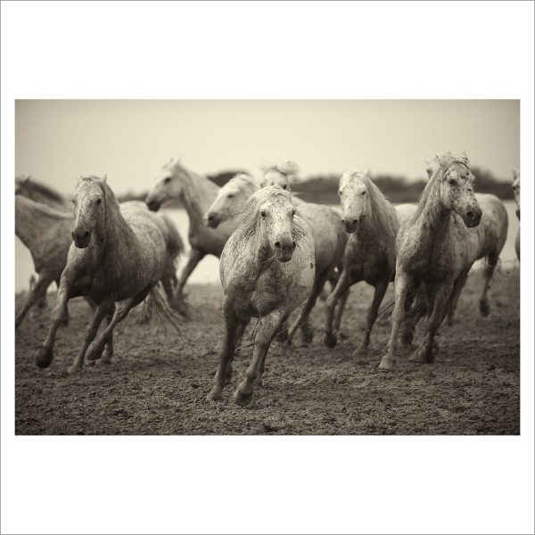 HORSES IN WILD- 039- LIMITED EDITION PRINT