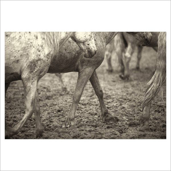 HORSES IN WILD- 042- LIMITED EDITION PRINT