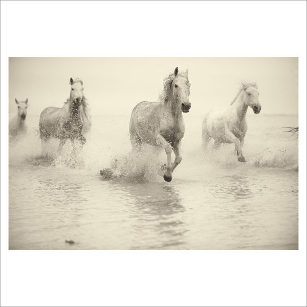 HORSES IN WATER- 044- LIMITED EDITION PRINT