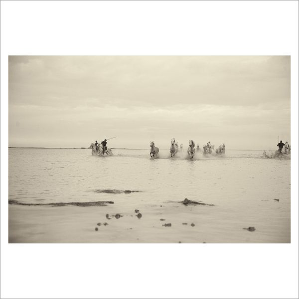 HORSES IN WATER- 045- LIMITED EDITION PRINT