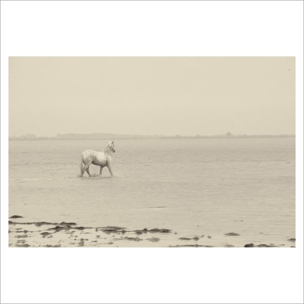 HORSE IN WATER- 046- LIMITED EDITION PRINT