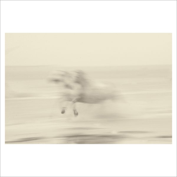 HORSES IN WATER- 047- LIMITED EDITION PRINT