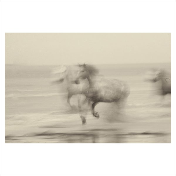 HORSES IN WATER- 048- LIMITED EDITION PRINT