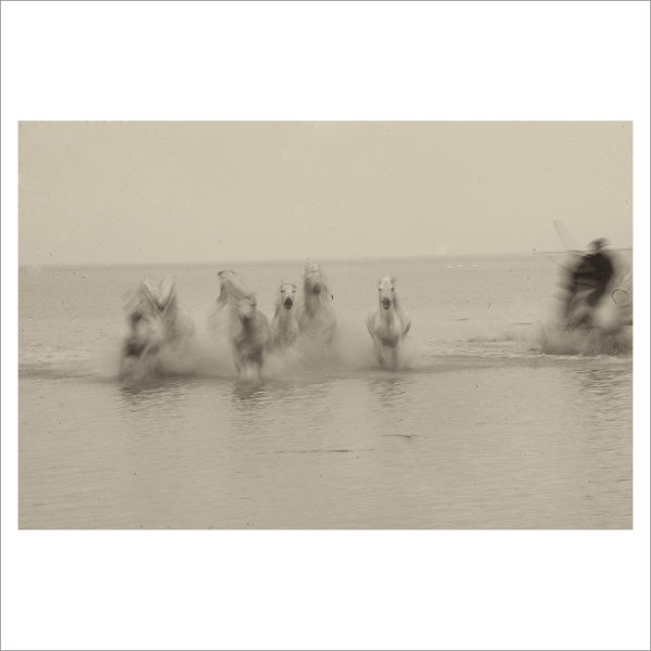 HORSES IN WATER- 049- LIMITED EDITION PRINT