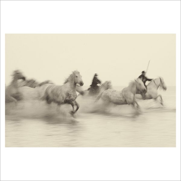 HORSES IN WATER- 050- LIMITED EDITION PRINT