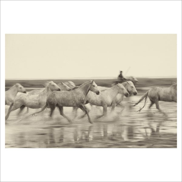 HORSES IN WATER- 051- LIMITED EDITION PRINT