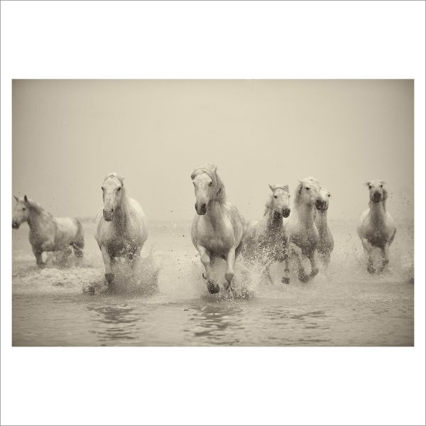 HORSES IN WATER- 052- LIMITED EDITION PRINT