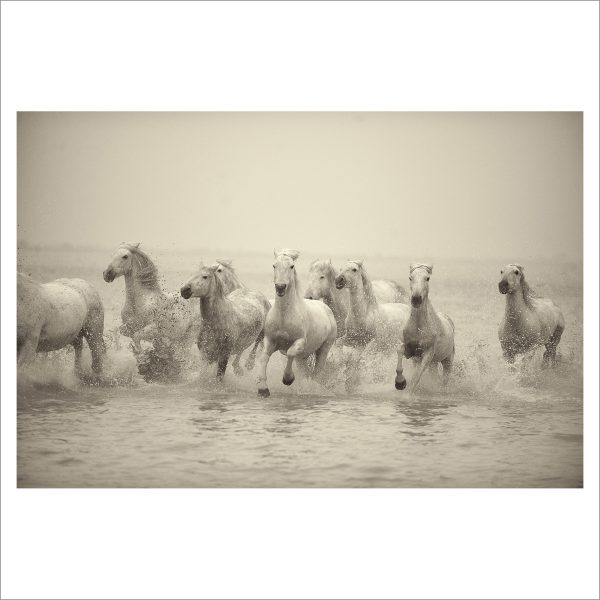 HORSES IN WATER- 055- LIMITED EDITION PRINT