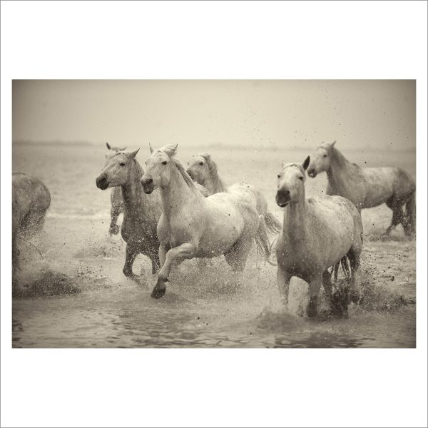 HORSES IN WATER- 056- LIMITED EDITION PRINT