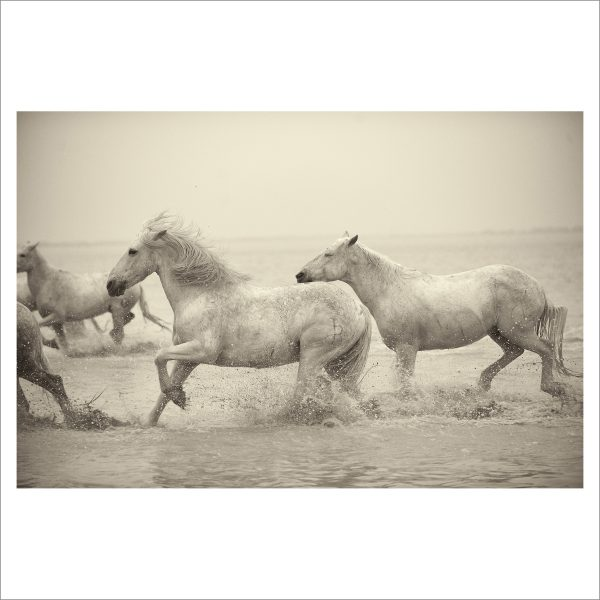 HORSES IN WATER- 057- LIMITED EDITION PRINT