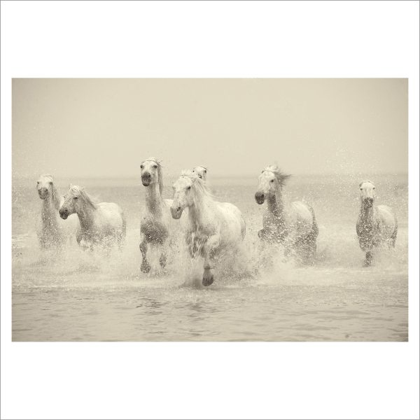 HORSES IN WATER- 058- LIMITED EDITION PRINT