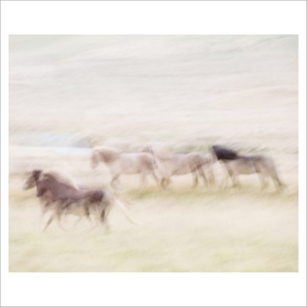 HORSES IN MOTION - 102 LIMITED EDITION PRINT